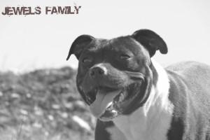 - Les diarrhées chez le chien - chounette-retouche-300x200